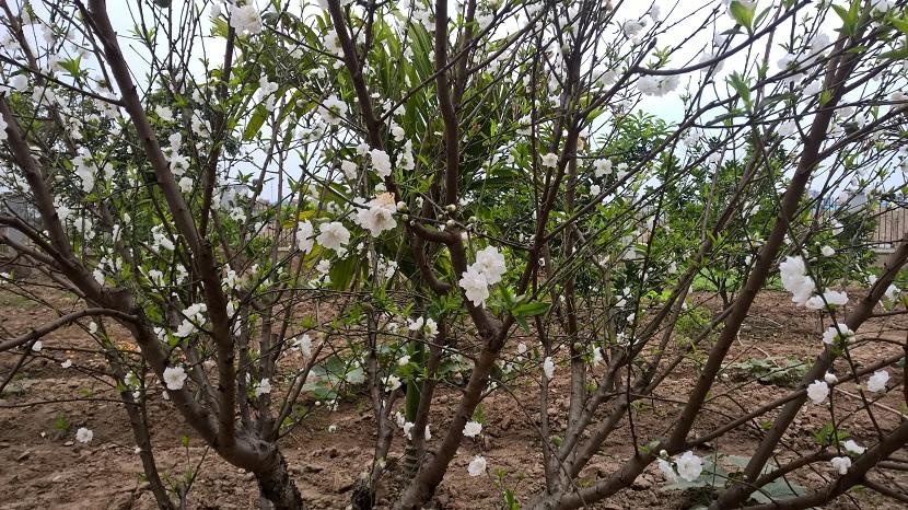 Sắc xuân Thạch Bàn - http://c3thachban.edu.vn