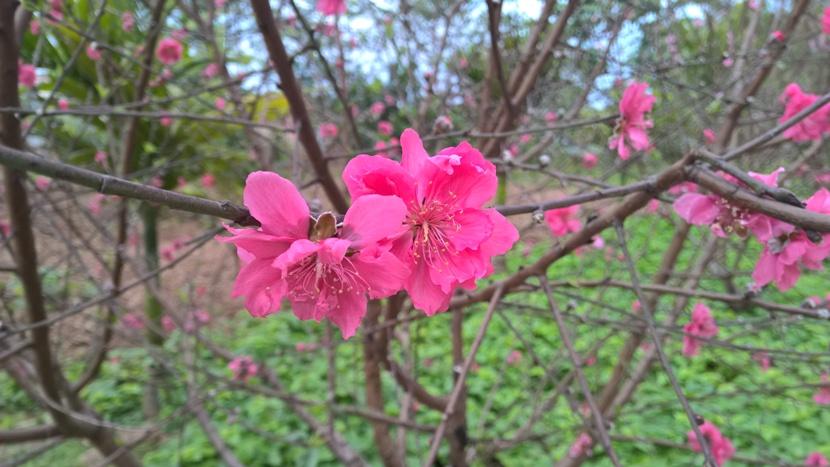 Xuân Thạch Bàn - http://c3thachban.edu.vn